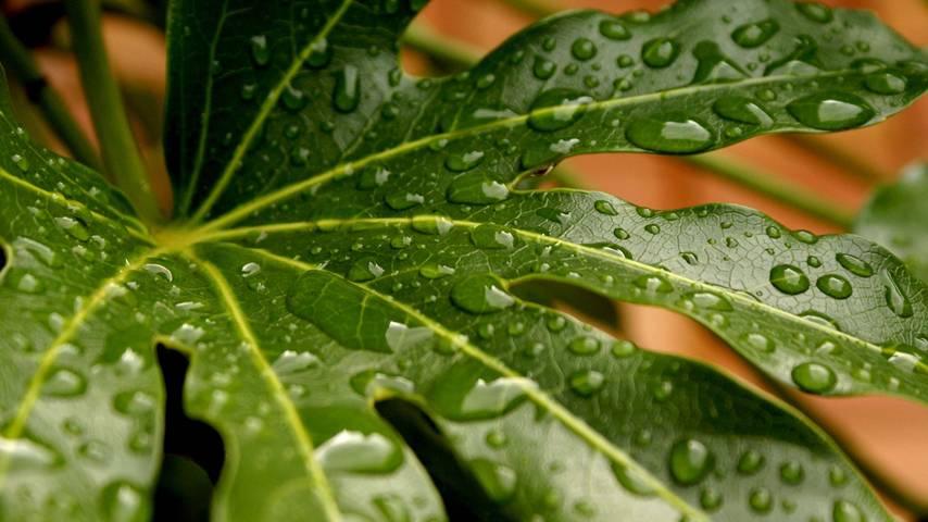 Webtv de l 39 universit de nantes pourquoi les plantes for Recherche sur les plantes vertes